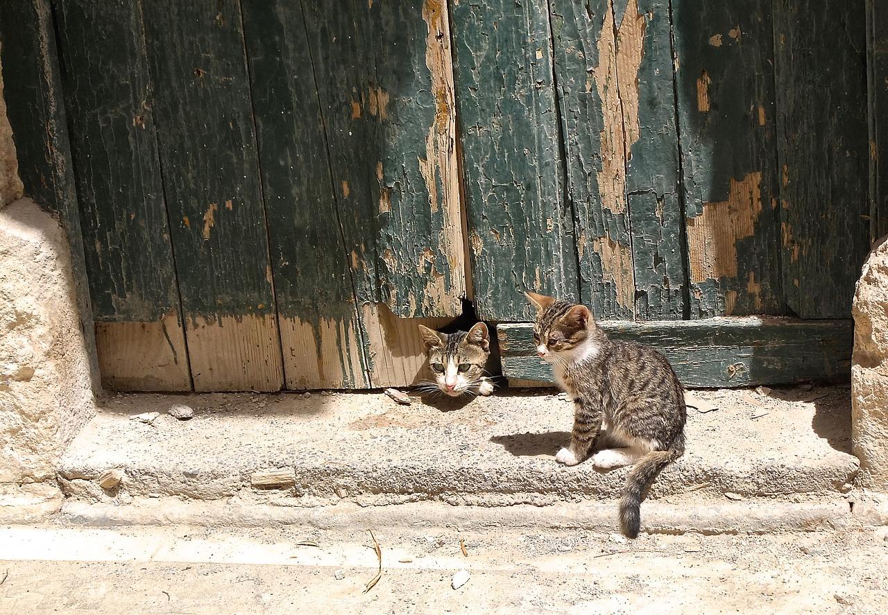 Chaton et porte